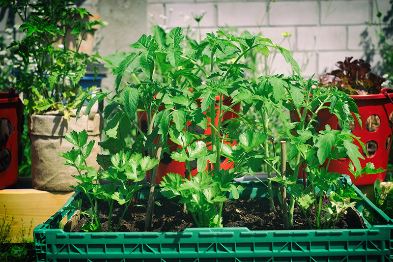 Urban Gardening - SoKuBi Team